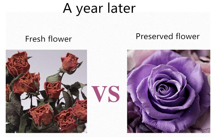 Moda preservada rosas reais eterna rosa flor preservada Com preço de fábrica