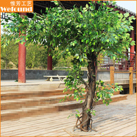 FT0939 ficus tree for park decoration landscaping ficus tree