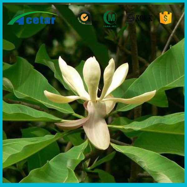 hot sales black cohosh powder extract 100% quality natural