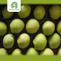 farm china shandong pear 15kg carton with great price
