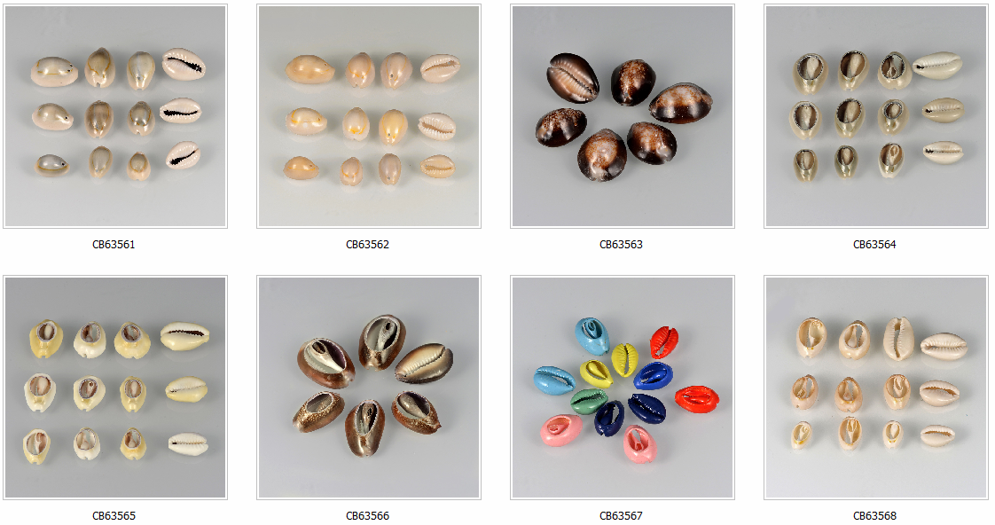 Wholesale Painted Mixed Color Natural Bead Cowrie Shells Shell Beads For Jewelry Making