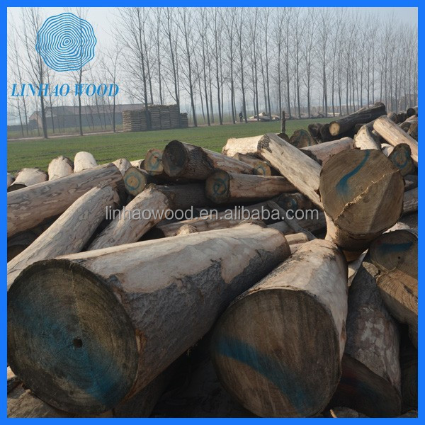 China Madeira Paulownia Logs