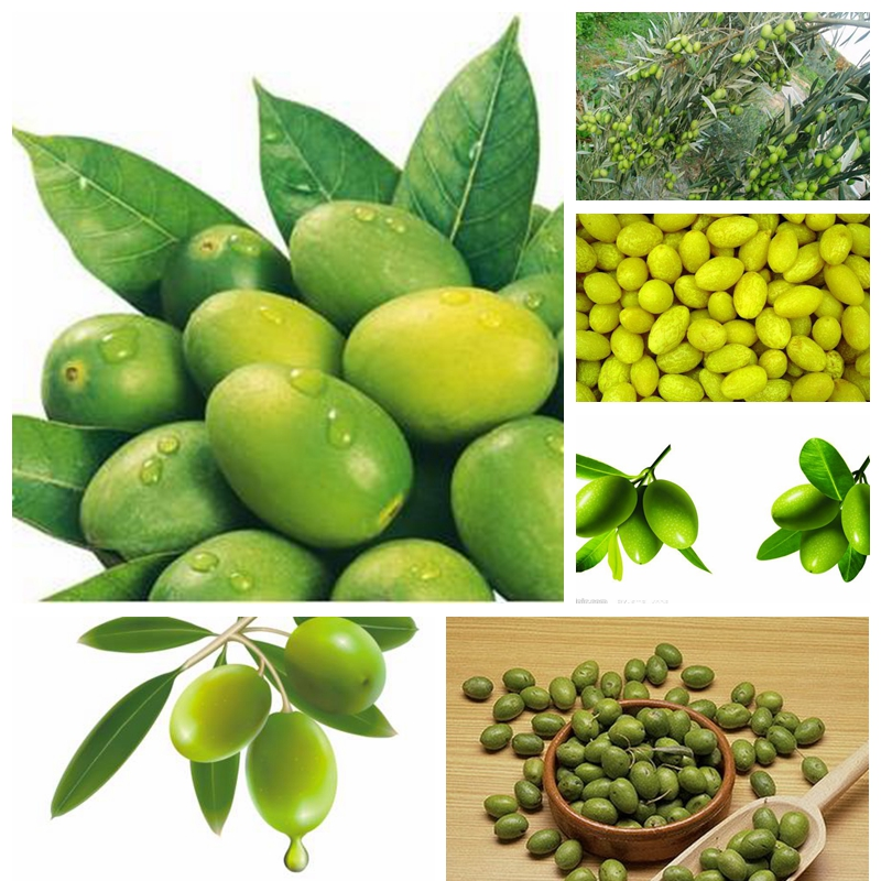 Free Shipping 100pcs mini bonsai Tree olive seeds , edible fruit and vegetable seeds, genuine ...