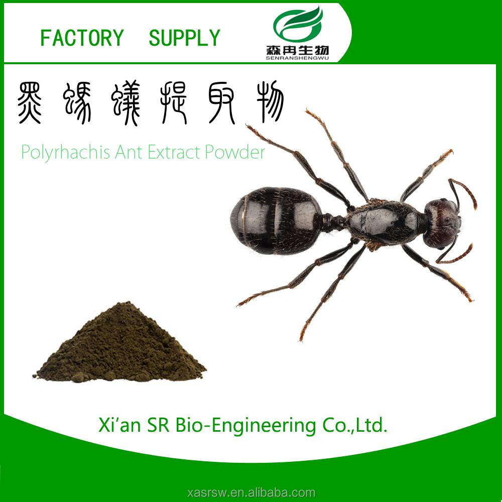 Schwarze Ameisen-Sexpillen Heiße Mädels ficken große Schwänze