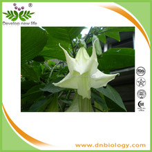 ISO9001 factory supply Natural Pure Scopolamine Powder 99% Scopolamine powder, Natural Scopolamine 99% in bulk with halal