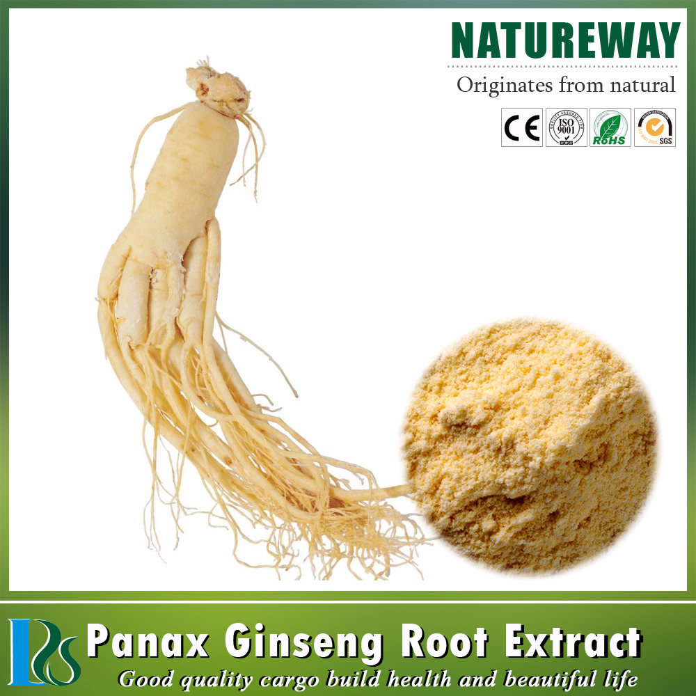 Factory 100% Natural Top Quality Panax Ginseng Root Extract Powder / Organic Ginseng Extract