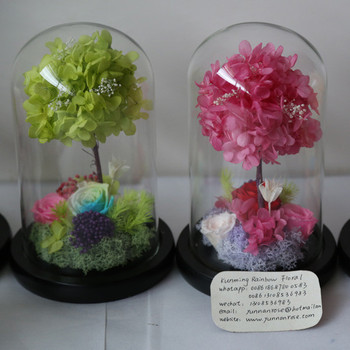 Kept More Than 3 Years Rose Preservation In Water Globe For Gifts