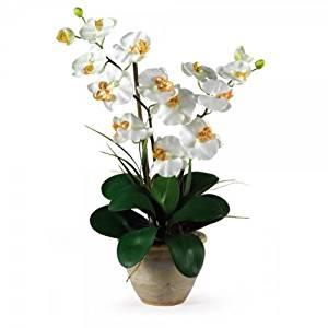 """Double Phalaenopsis Orchid Arrangement (Cream) (25""""H x 15.5""""W x 12""""D)"""