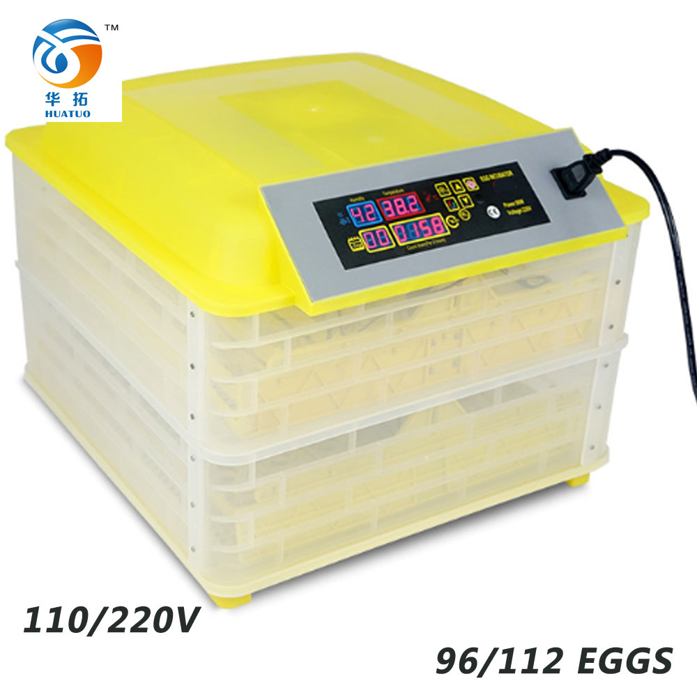 China Frozen Eggs, China Frozen Eggs Manufacturers and