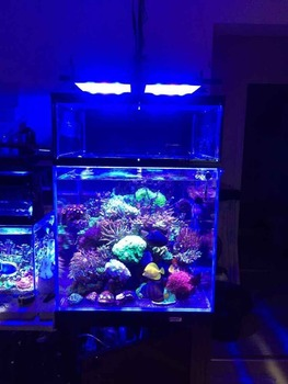 Dimmable 165w Led Aquarium Light Chinese Freshwater Fish Tank Used ...