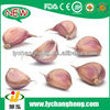 /product-detail/natural-garlic-wholesale-garlic-garlic-price-for-importers-of-russia-1677272562.html