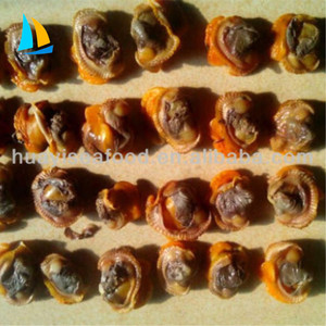 Dandong ark shell meat and cooking frozen blood clam for sale