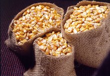 Agricultural Products yellow maize