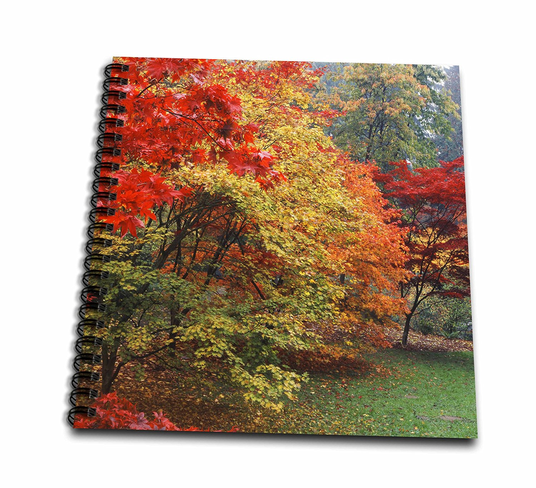 Danita Delimont - Autumn - Washington Park, Autumn, Seattle, Washington, USA - US48 PSO0096 - Paul Souders - Memory Book 12 x 12 inch (db_148467_2)