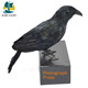 Guangdong manufactory hot sell halloween realistic crow