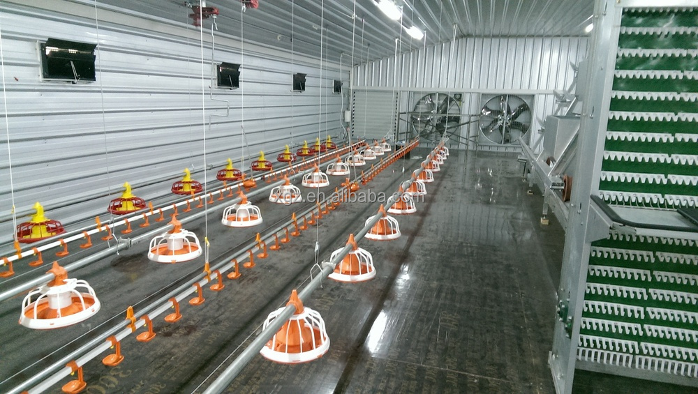 Q235 or Q345 construction design poultry farm commercial chicken house
