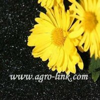 selling well all over the world reasonable price of soluble humic acid organic fertilizer