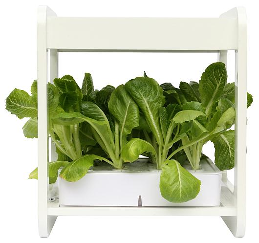 Small hydroponic system 1