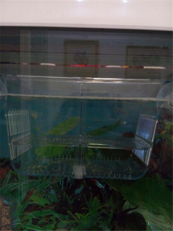 2 In 1 Aquarium Acrylic Fish Hatchery Breeding And Isolation Box ...