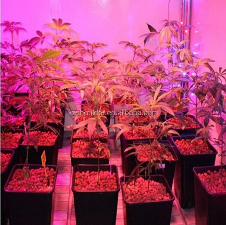 Full Spectrum Led Grow Lights 50w E27 Led Grow Lamp Bulb For ...