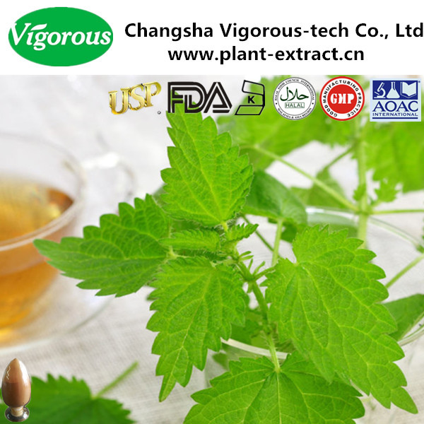 1%Organic silicas tinging nettle extract/nettle extract powder