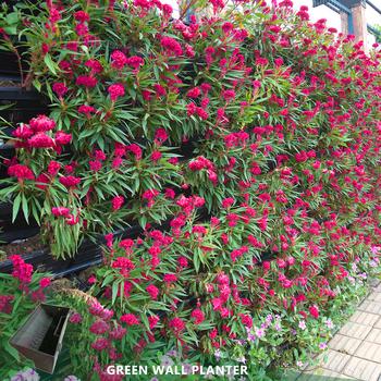 Flora Felt Living Wall Vertical Garden Planter Plastic Flower Pots Buy Vertical Garden Wall Hanging Flower Pots Green Wall System Product On Alibaba Com