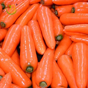 China best shandong jinxing Fresh carrot/carrot production
