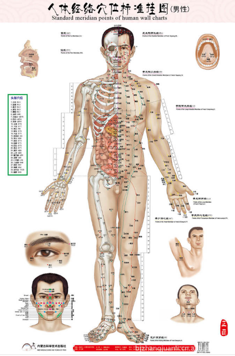 Chinese medical acupuncture points charts buy medical wall chart