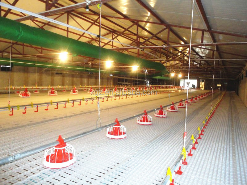 modern low price automatic broiler chicken farming made in china