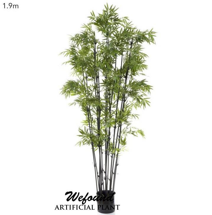wf07302 japanische bambus mit schwarzem stiel topfpflanze. Black Bedroom Furniture Sets. Home Design Ideas