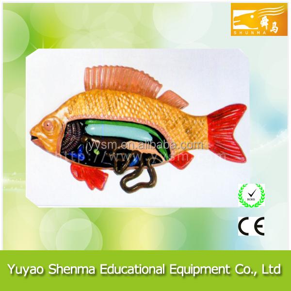 Finden Sie Hohe Qualität Anatomie Fisch Modell Hersteller und ...