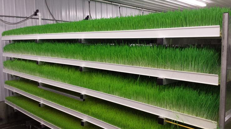 Multi Function Hydroponic Fodder Processing System Barley