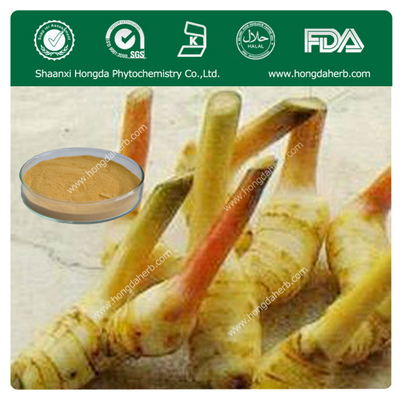 Factory Price GALANGAL ROOT EXTRACT