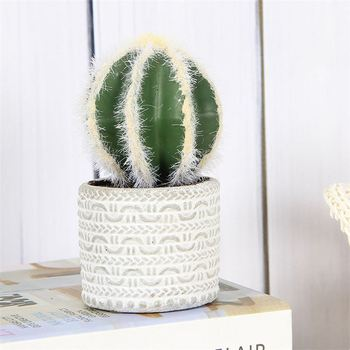 High Performance Diffe Types Cactus Plants Indoor Flower Pots