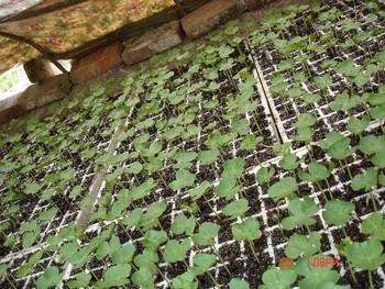 Greenhouse Hydroponics Seedling Pots Gardening Trays