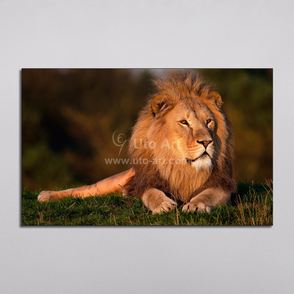 Modern Home Decoration Piece Painting Animal Lion Under Sunlight Modular Picture Digital Printing on Canvas for Artwork Dropship