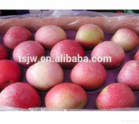 Pome Fruit Product Type and Red Color apple qinguan apples export to India