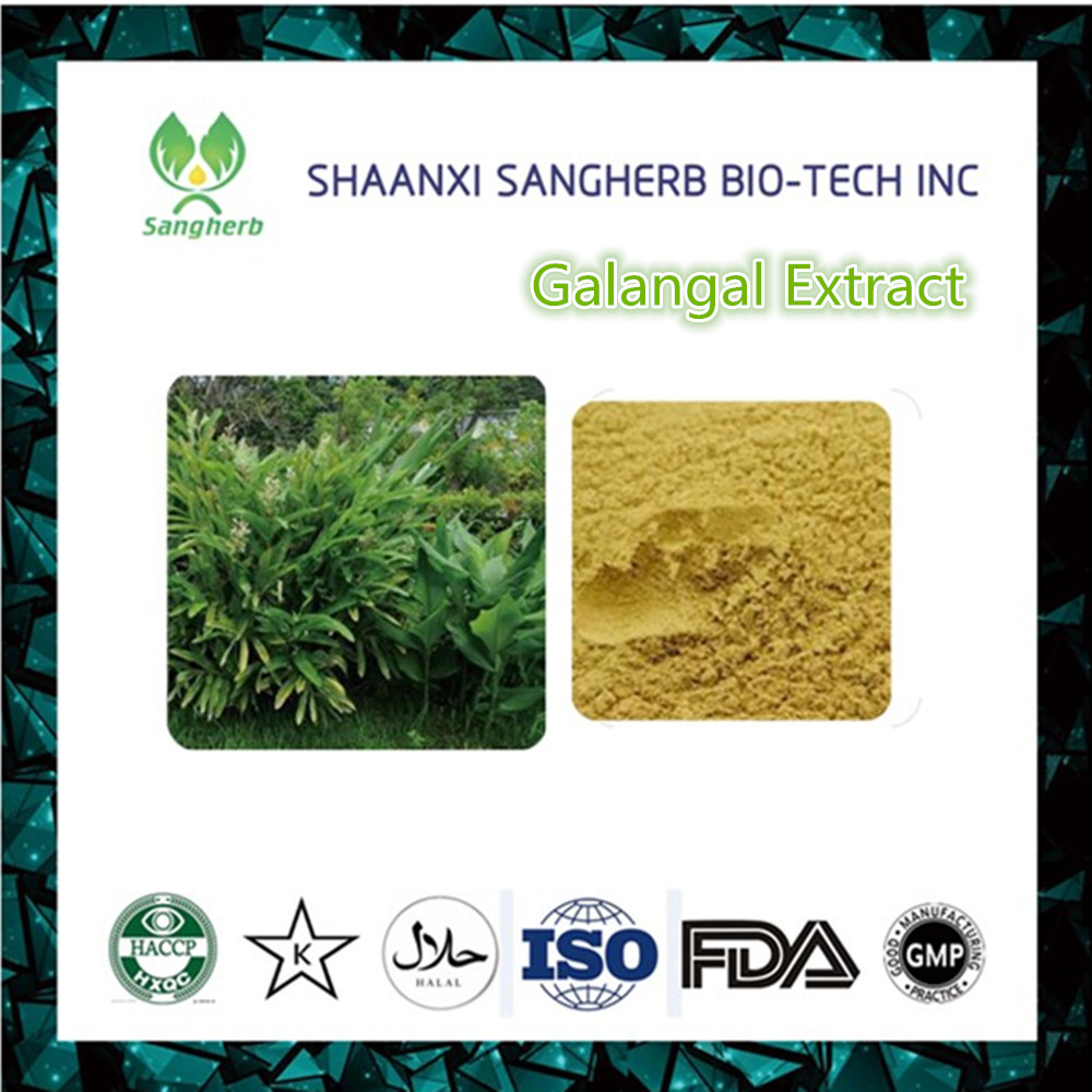 High Quality Fresh Galangal Root Extract Powder With Best Price