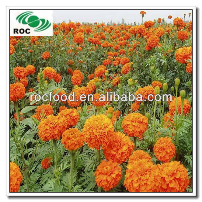 Marigold extract lutein ester