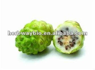 high quality Noni fruit Extract supplier