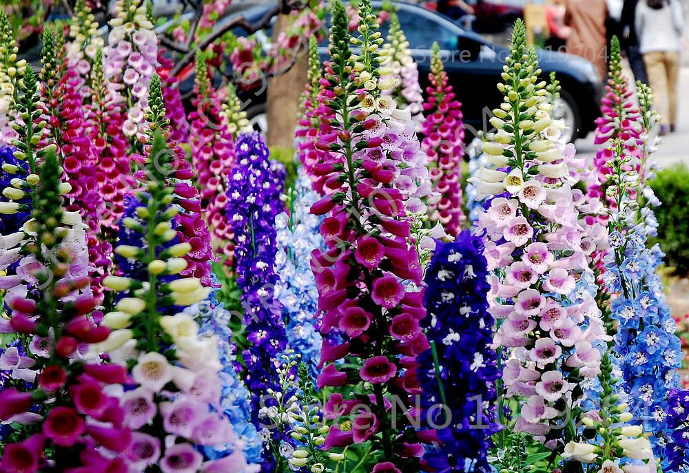 Online Get Cheap Foxglove Flower -Aliexpress.com | Alibaba