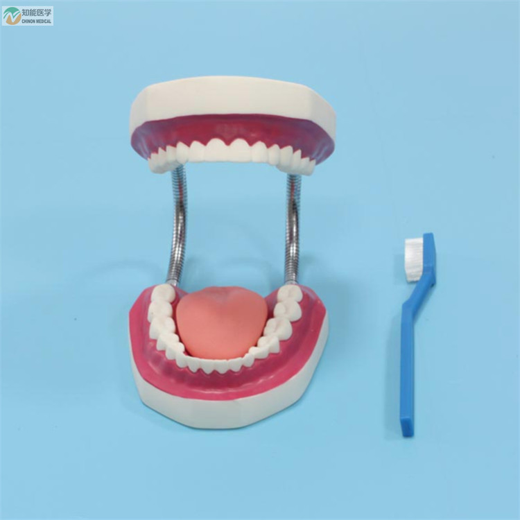 Venta al por mayor dientes humano-Compre online los mejores dientes ...