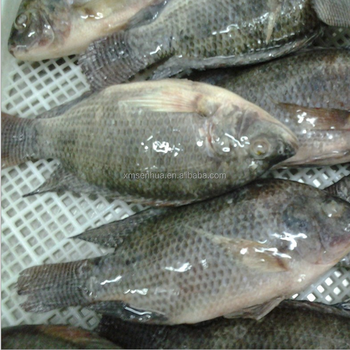 Seafood Wholesale Top Quality Fresh Frozen Whole Tilapia - Buy Seafood  Wholesale Frozen Whole Tilapia,Top Quality Frozen Whole Tilapia,Fresh  Frozen