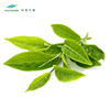 Chinese supplier pure organic matcha green tea leaves exract powder