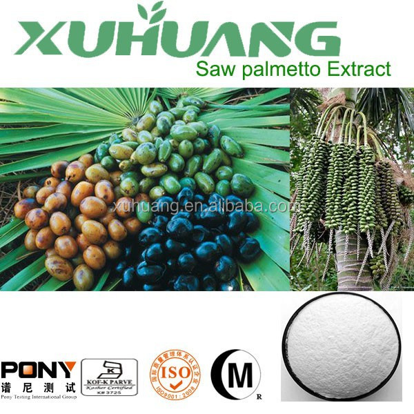 High Quality and High content Pure Saw palmetto Extract