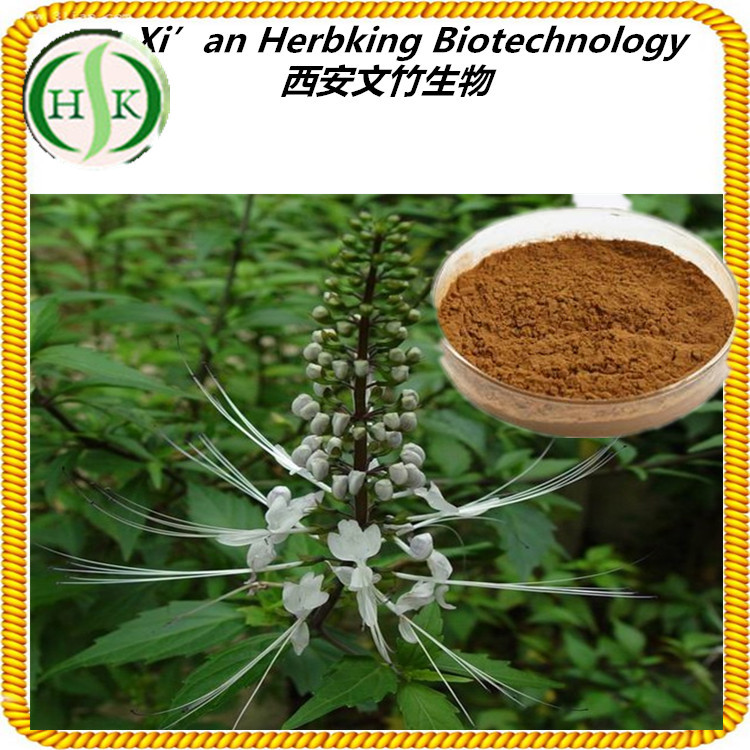 Factory Supply CAS 84776-26-1 Black Cohosh powder. By HPLC Triterpene glycosides