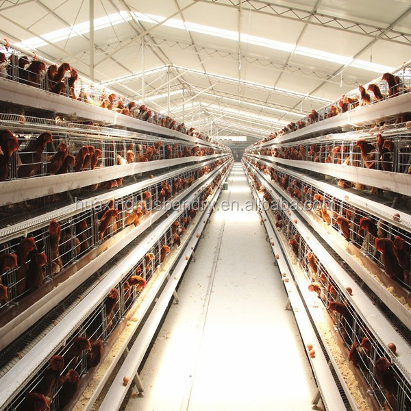 Feed Saving Design Modern Chicken Farm/poultry Farm Cage