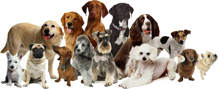 Different Kinds Of Dogs And Puppies For Sale Buy Dogs Product On