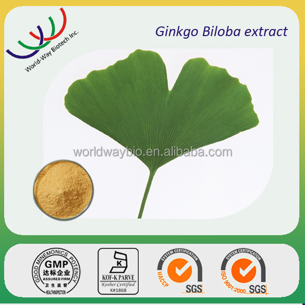 free sample HACCP KOSHER FDA manufacturer raw material 24/6 <1ppm ginkgo biloba leaf extract