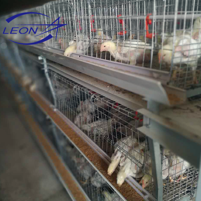 Leon Series automatic poultry chicken cage system for broilers and layers